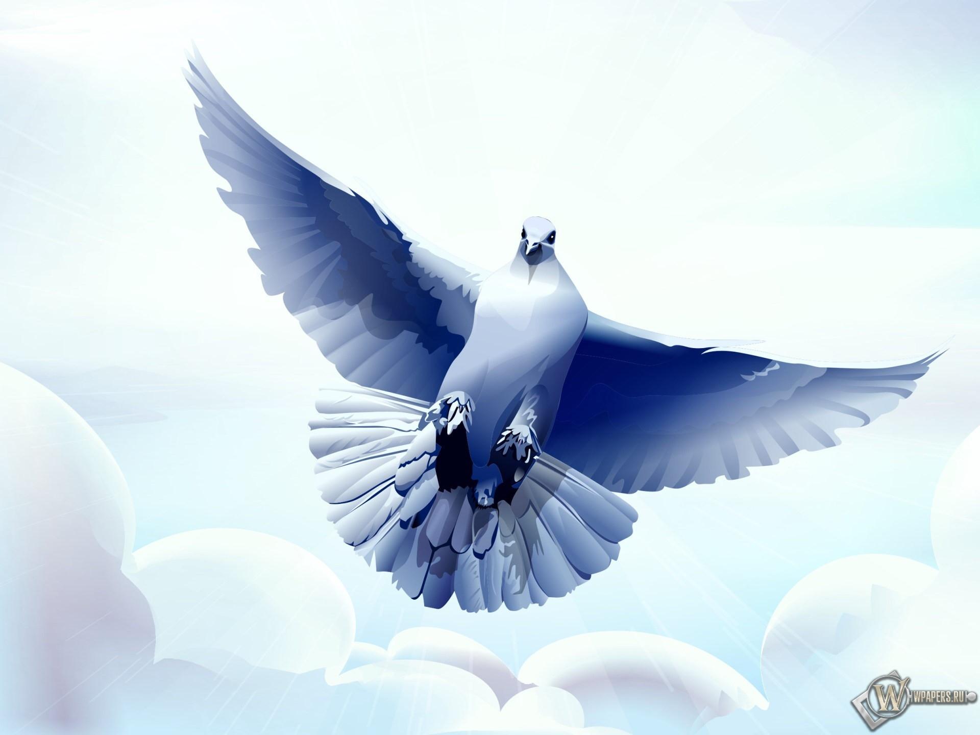 Рисованный голубь 1920x1440
