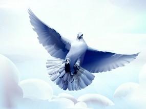 Обои Рисованный голубь: Облака, Птица, Вектор, Голубь, Птицы