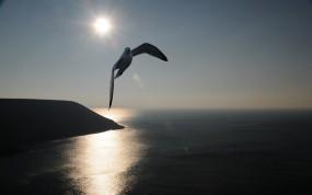 Обои Чайка над морем: Море, Солнце, Чайка, Птицы