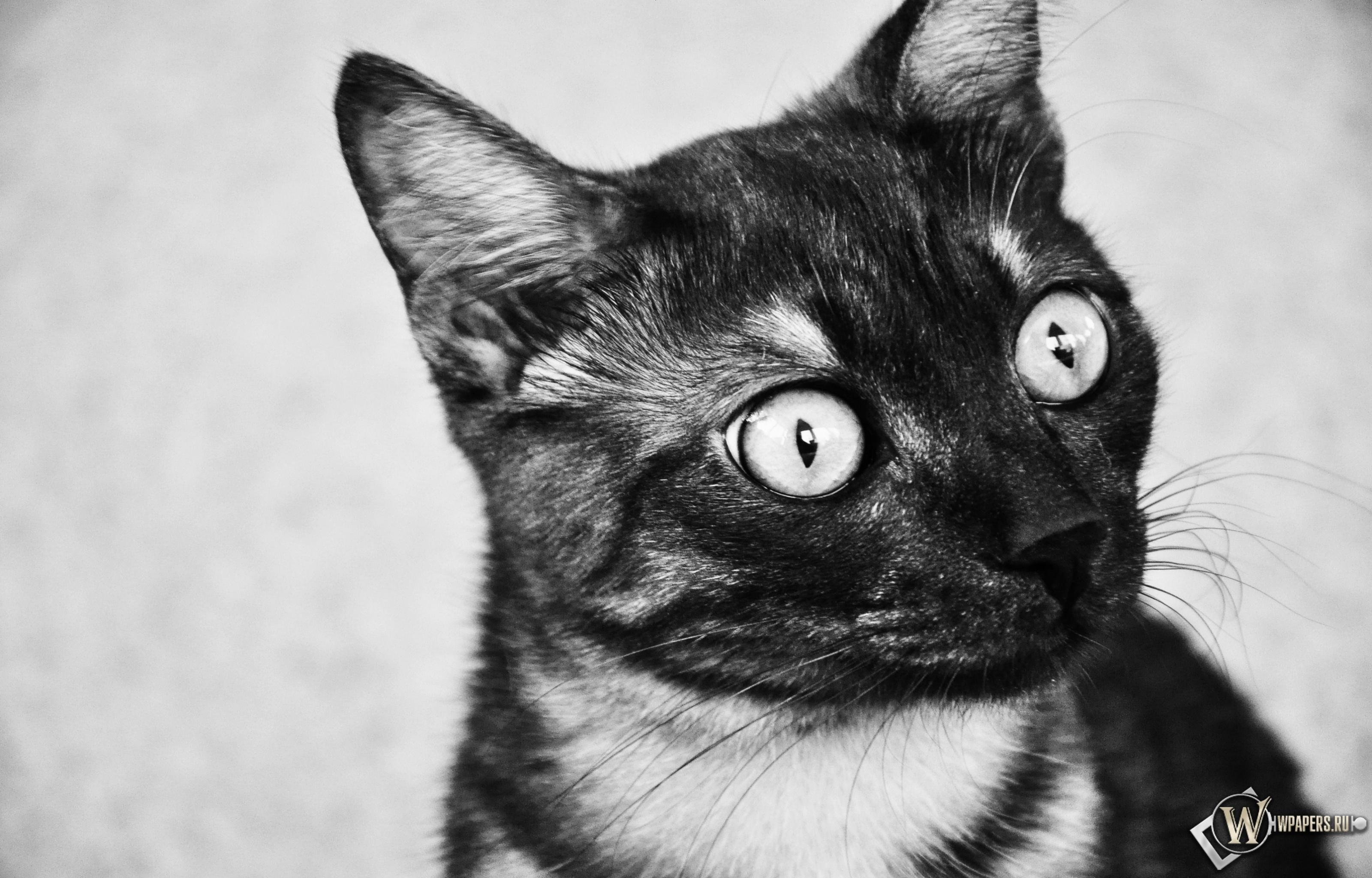 удивленный котик 3200x2048