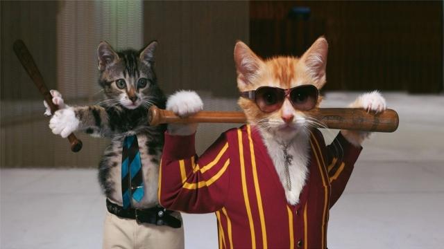 Кошачья братва