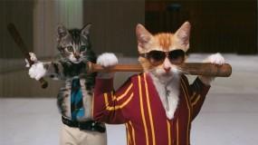Обои Кошачья братва: Котята, Банда, Братва, Кошки