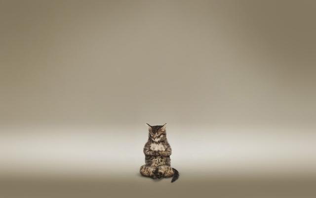 Кот медитирует