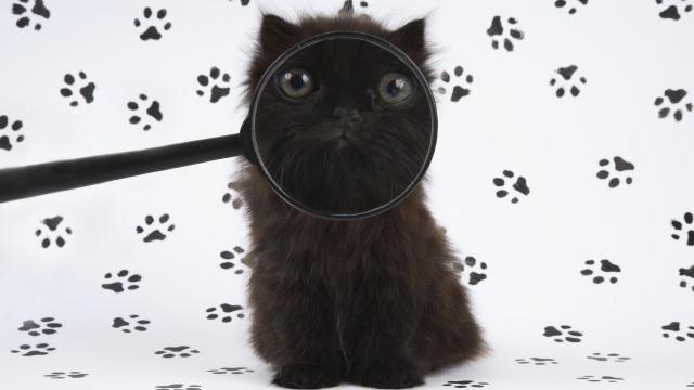 Котенок с лупой