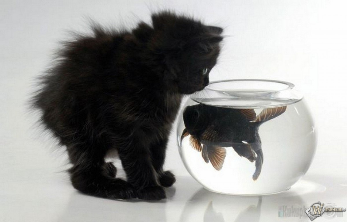 Котенок и аквариум с рыбкой 1200x768