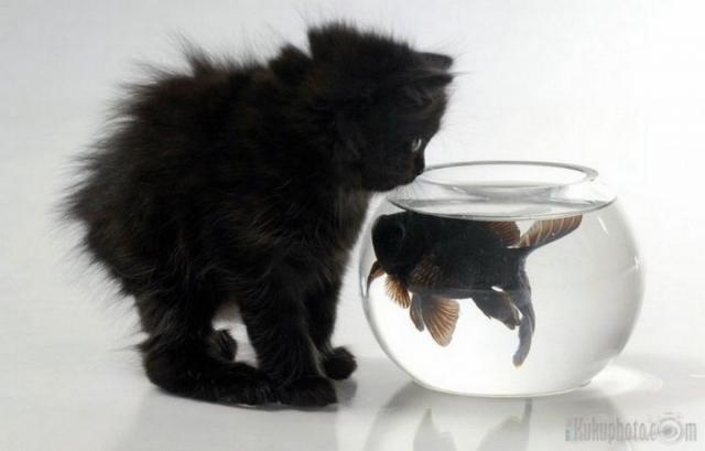 Котенок и аквариум с рыбкой