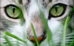 Обои Cat Grass: Взгляд, Кот, Кошки