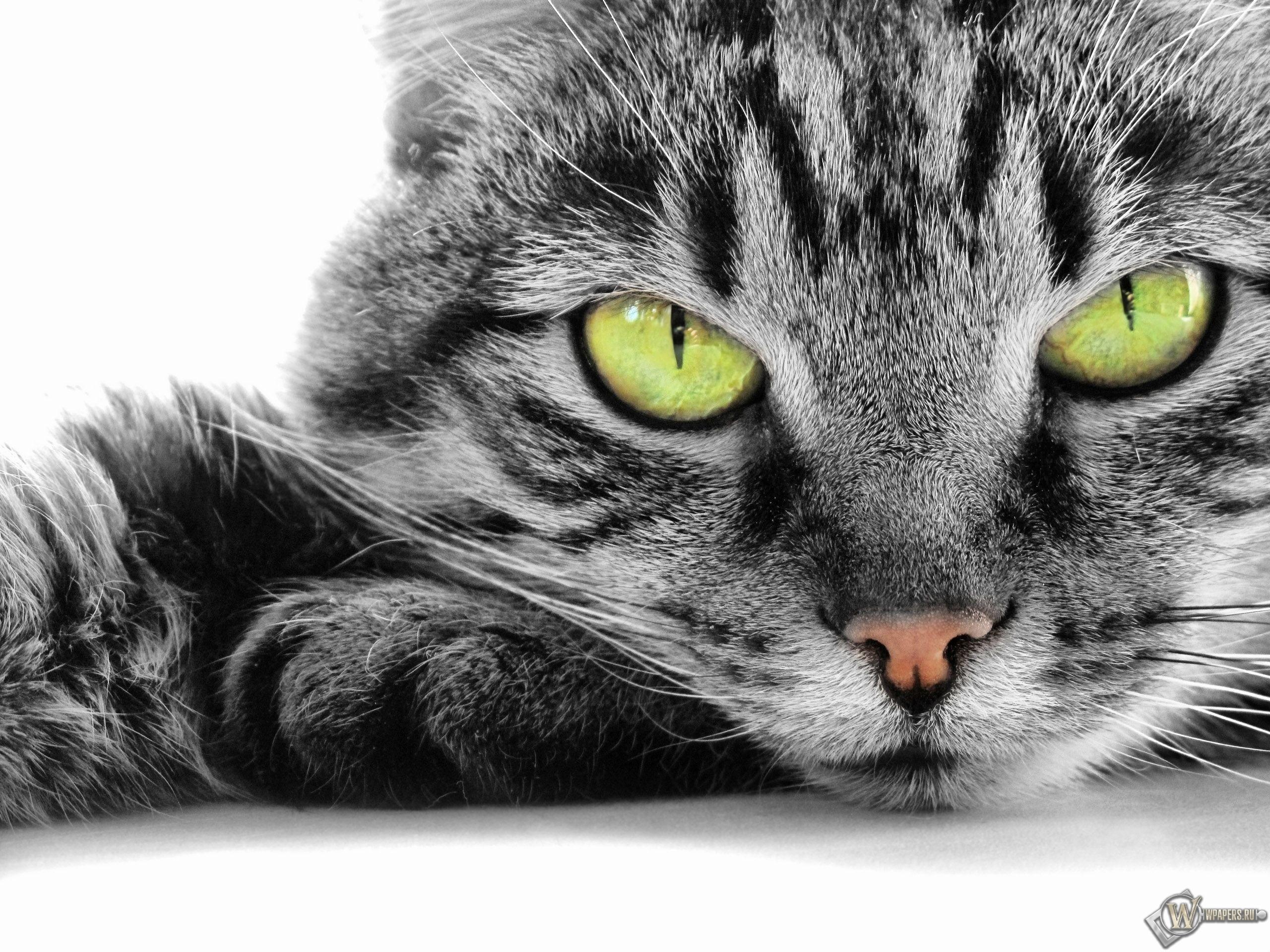 кошачья мордочка 2560x1920