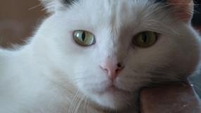 Обои посмотри на меня: Кот, Белый, Отдых, Кошки