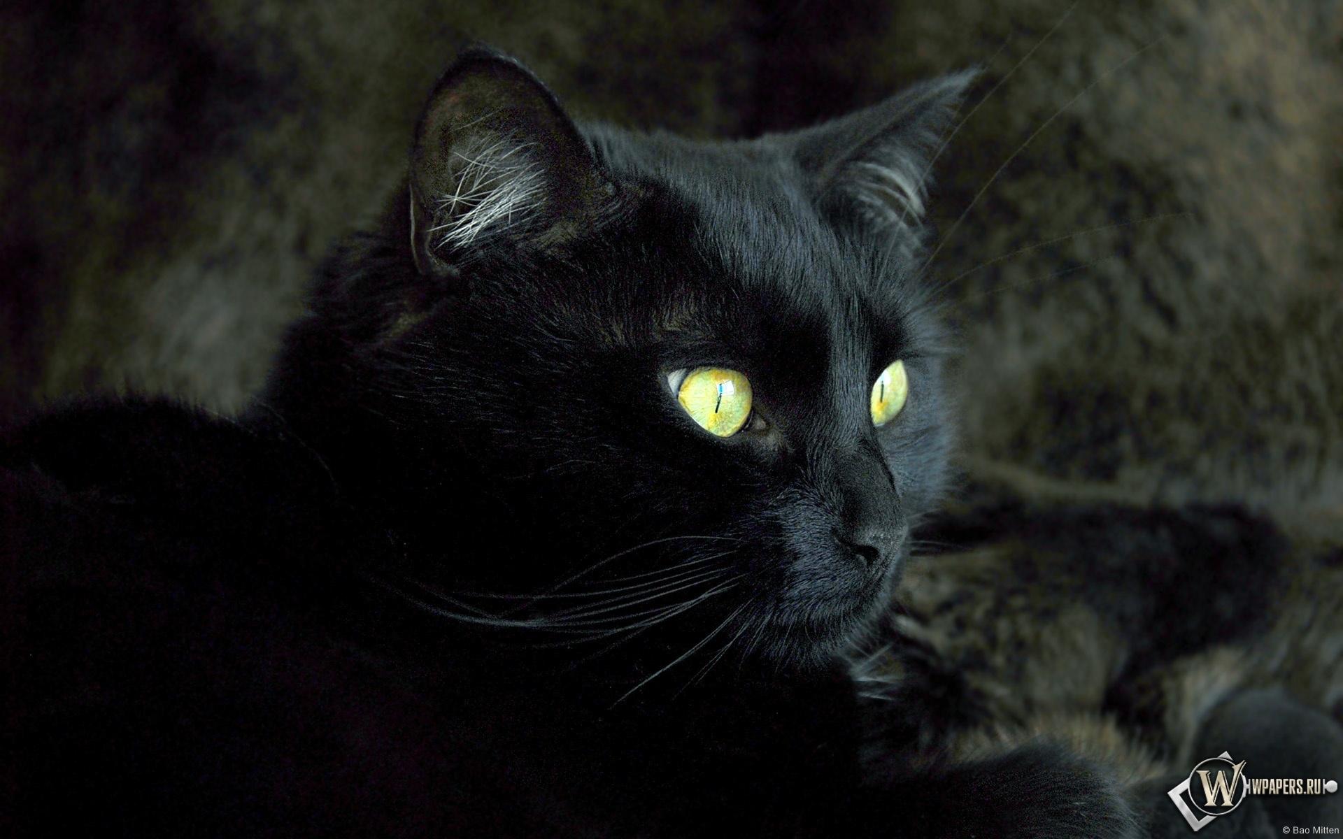 Кошка 1920x1200