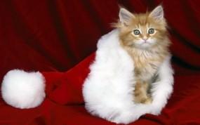 Обои Кошки тоже любят Новый год: Новый год, Шапка, Красный, Котёнок, Кошки