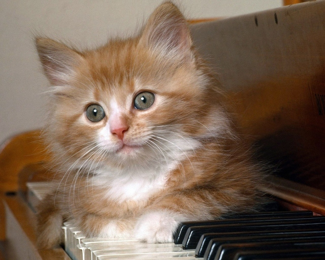 Котёнок на фортепиано