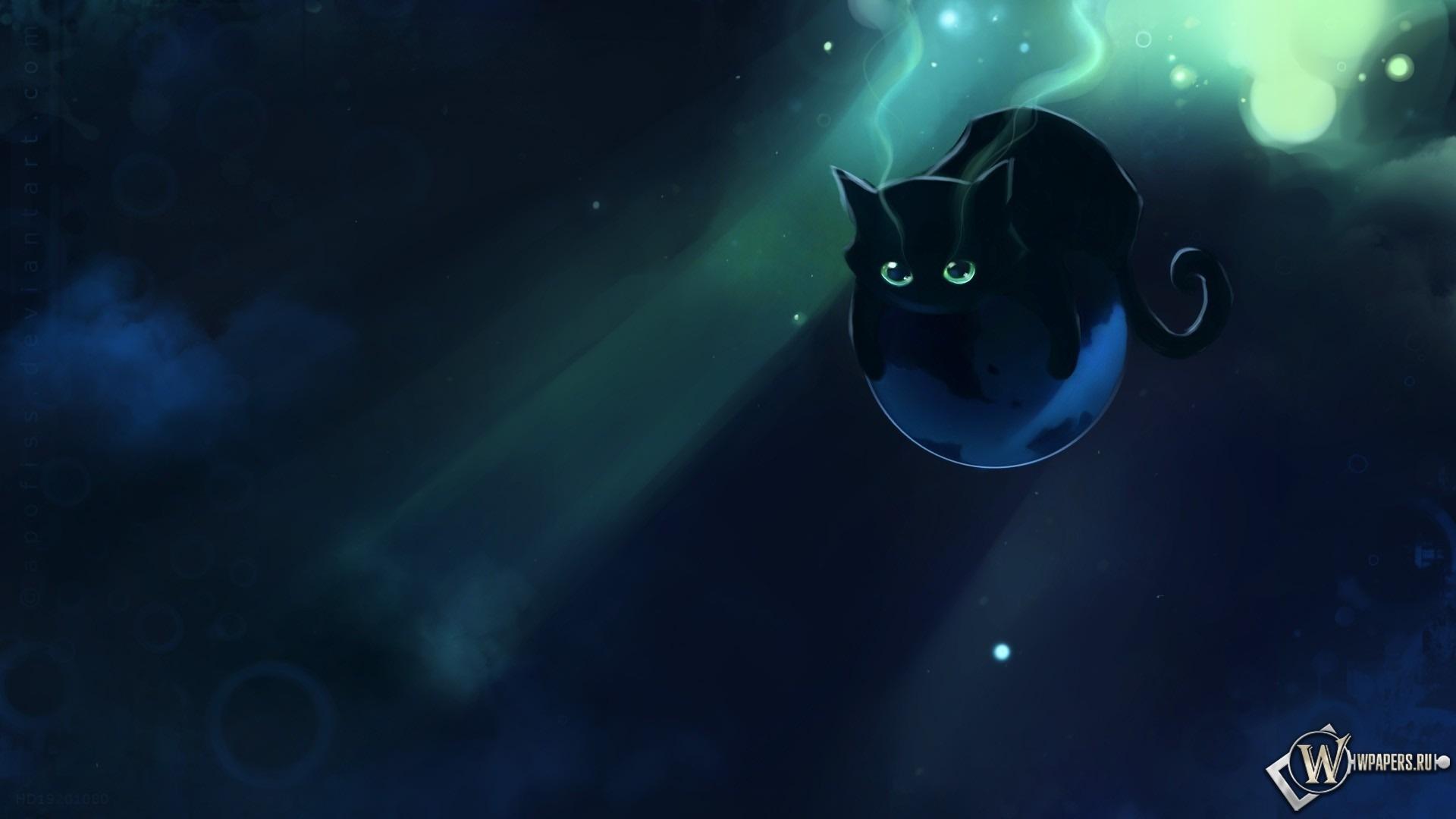 Чёрный котенок 1920x1080
