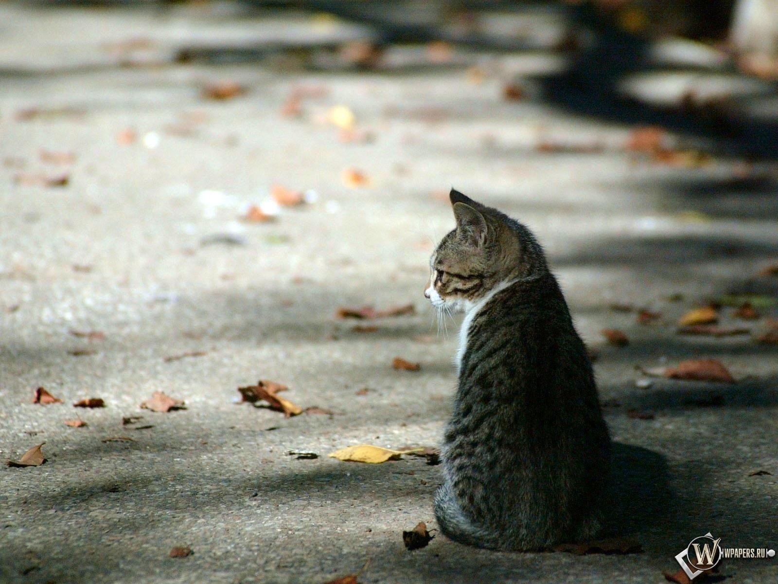 Осенний котёнок 1600x1200