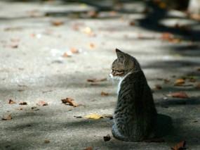 Обои Осенний котёнок: Осень, Котёнок, Листья, Кошки