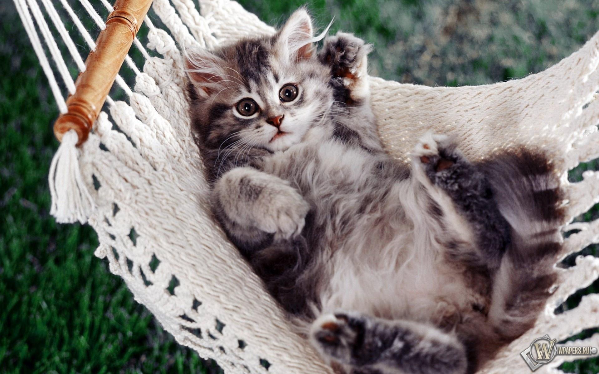 Котёнок в гамаке 1920x1200