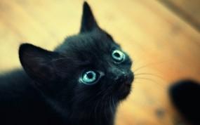 Обои Чёрный котёнок: Глаза, Чёрный, Макро, Котёнок, Кошки