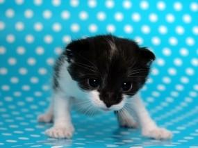 Обои Маленький зверь: Котёнок, Точки, Кошки