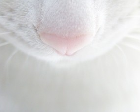 Обои Нос кошки: Усы, Кошка, Нос, Кошки