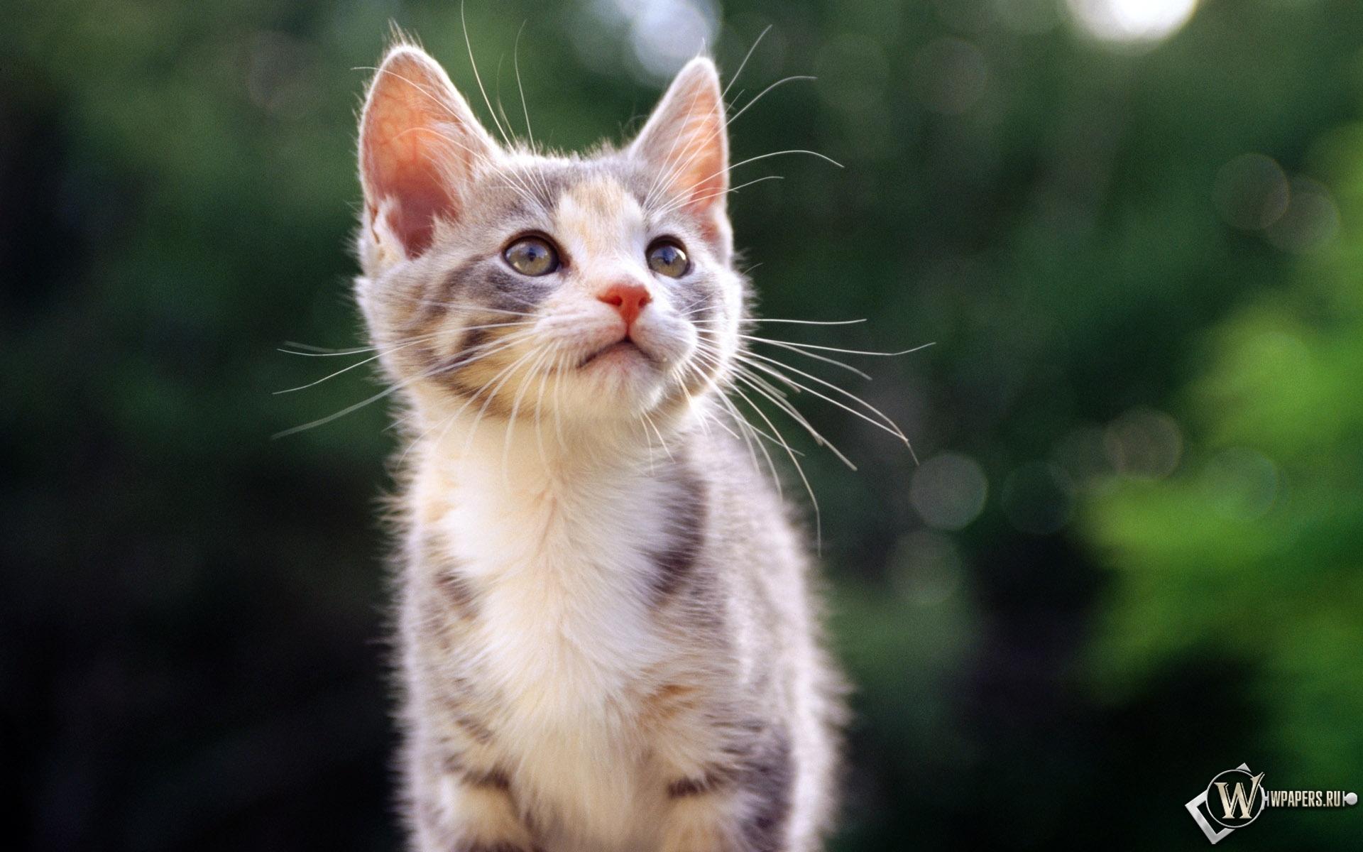 Красивый Котёнок 1920x1200