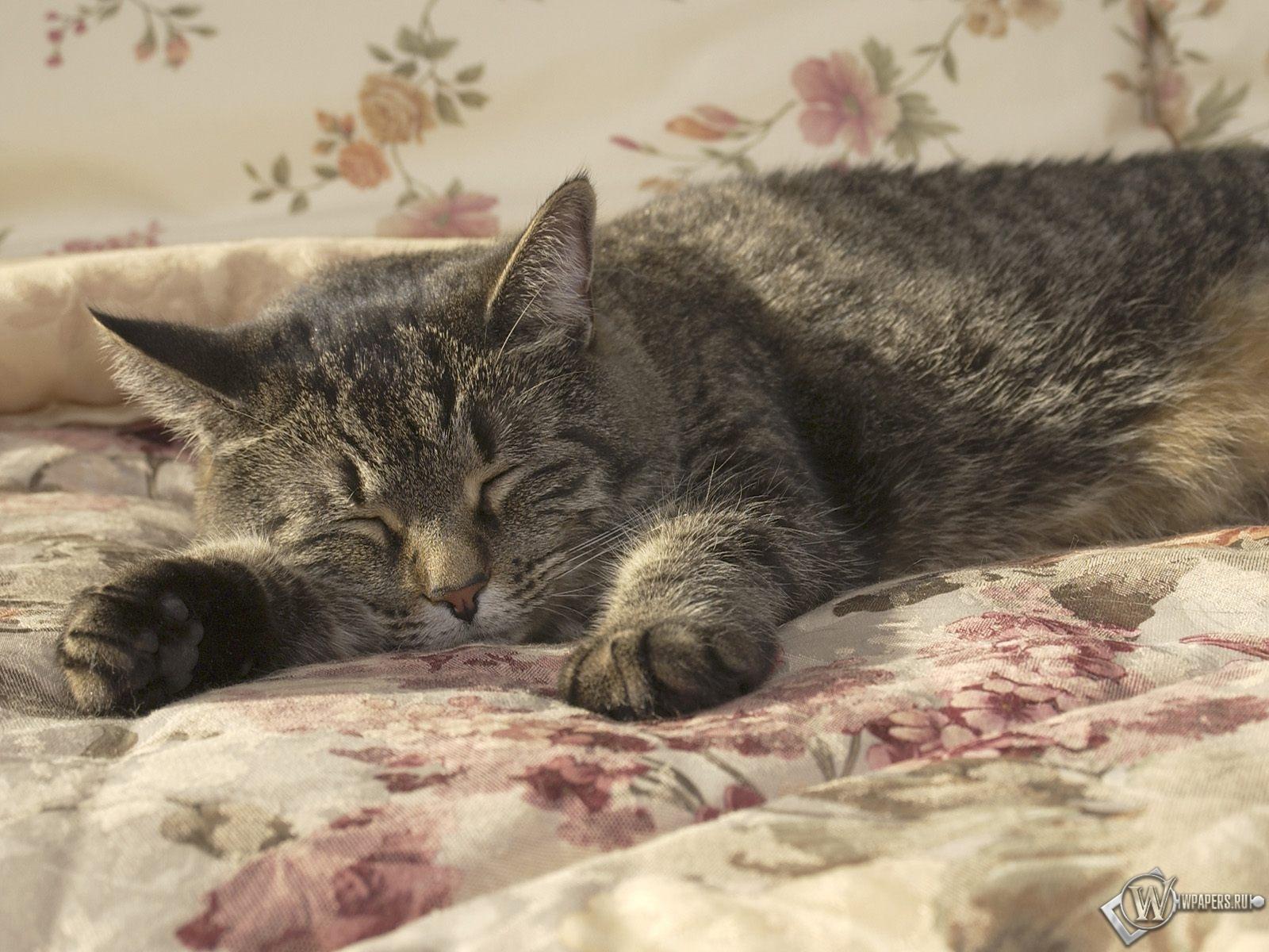 Спящий кот 1600x1200