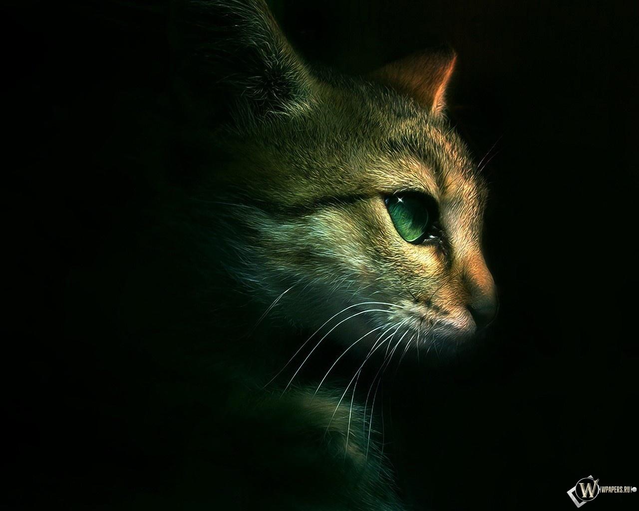 Кот на чёрном фоне 1280x1024