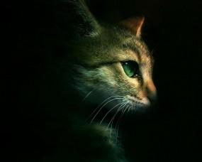 Обои Кот на чёрном фоне: Кот, Минимализм, Профиль, Кошки