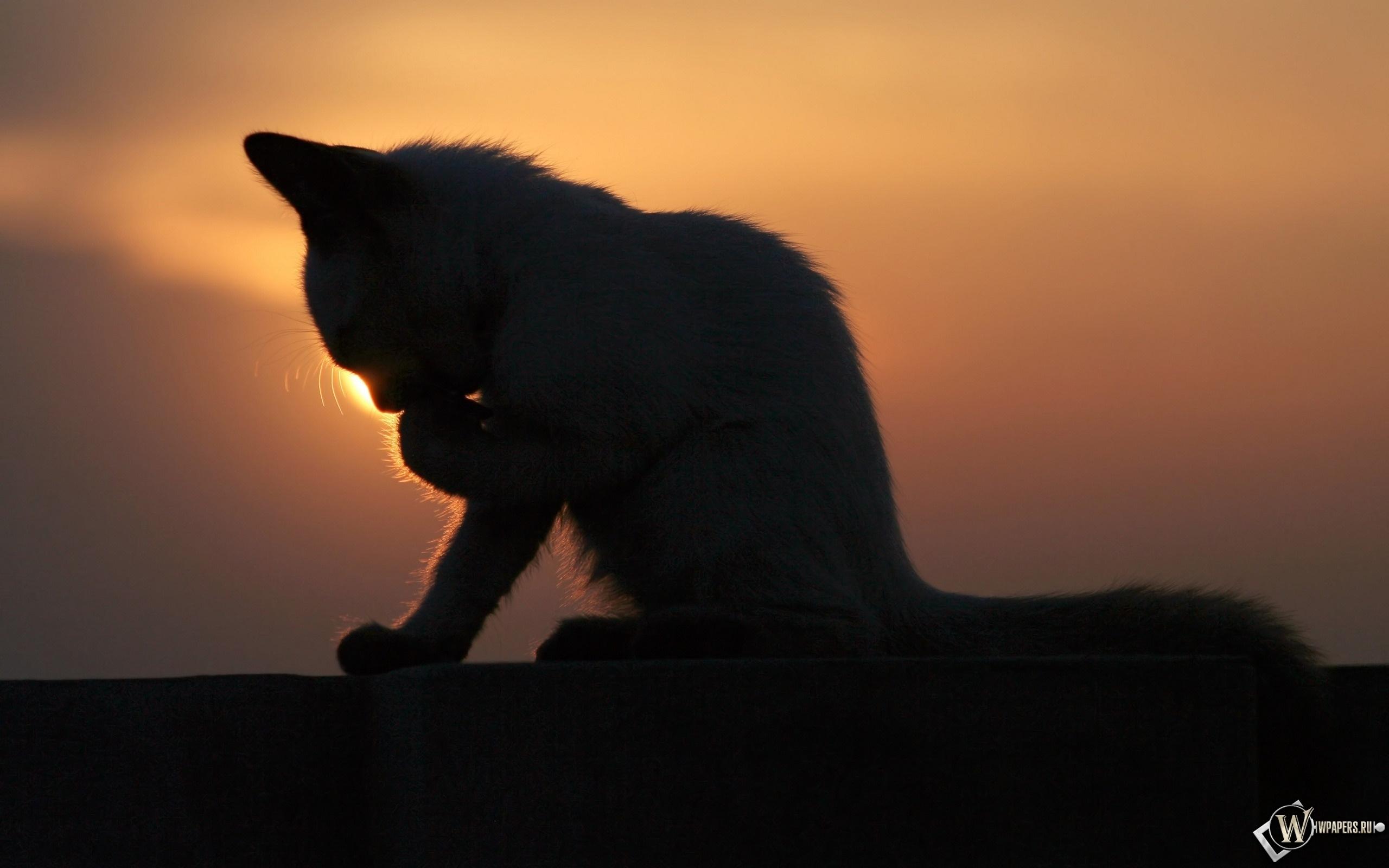 Котёнок на закате 2560x1600