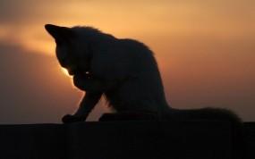 Обои Котёнок на закате: Закат, Котёнок, Кошки