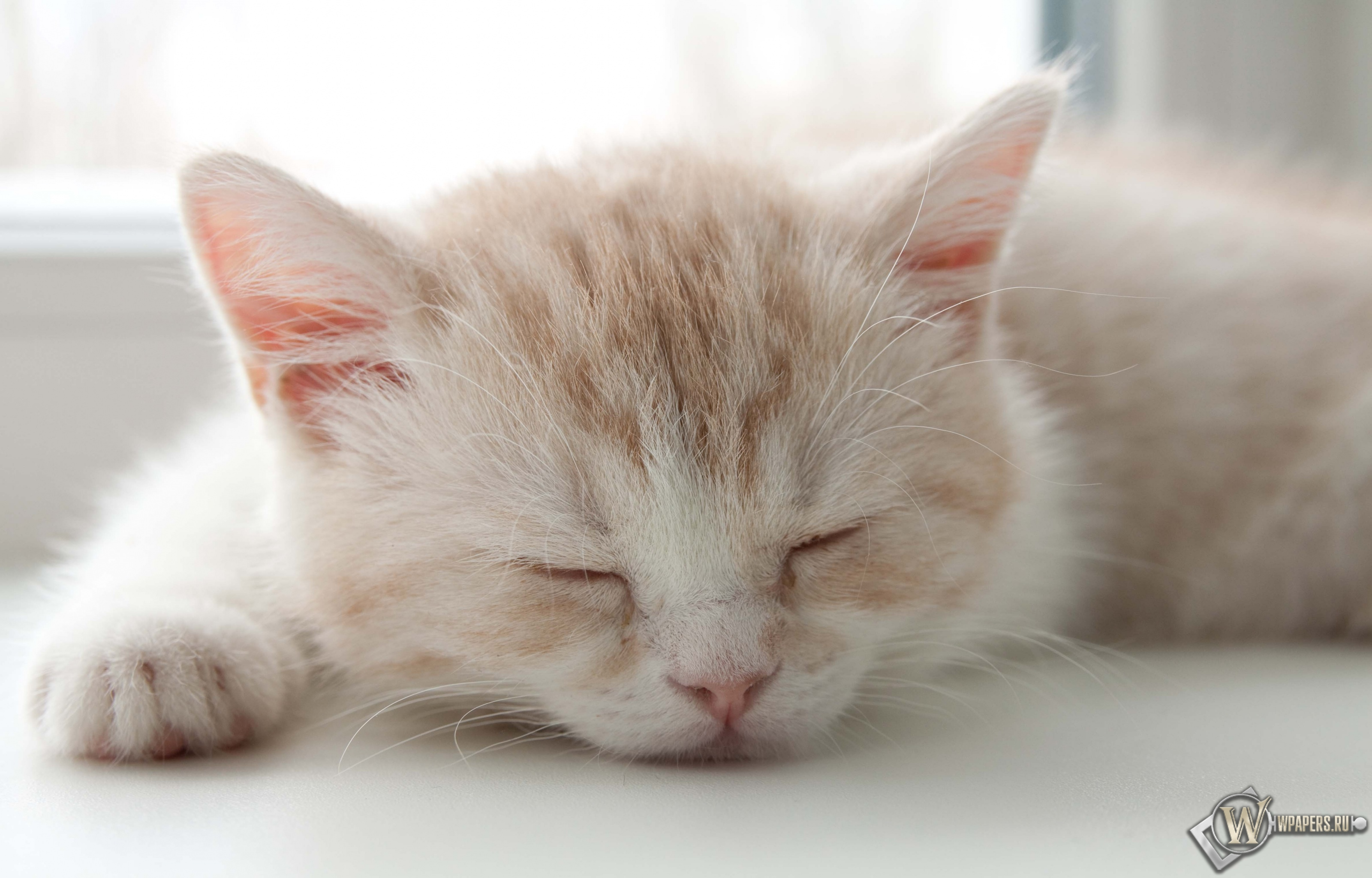 Котёнок спит 3200x2048