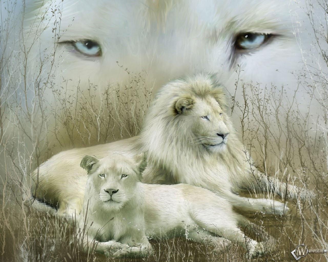 Белые львы 1280x1024