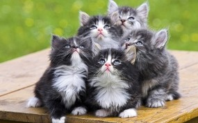 Обои Симпатичные котята: Взгляд, Котята, Кошки