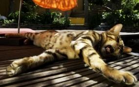 Обои Кот зевает: Солнце, Кот, Зонт, Кошки
