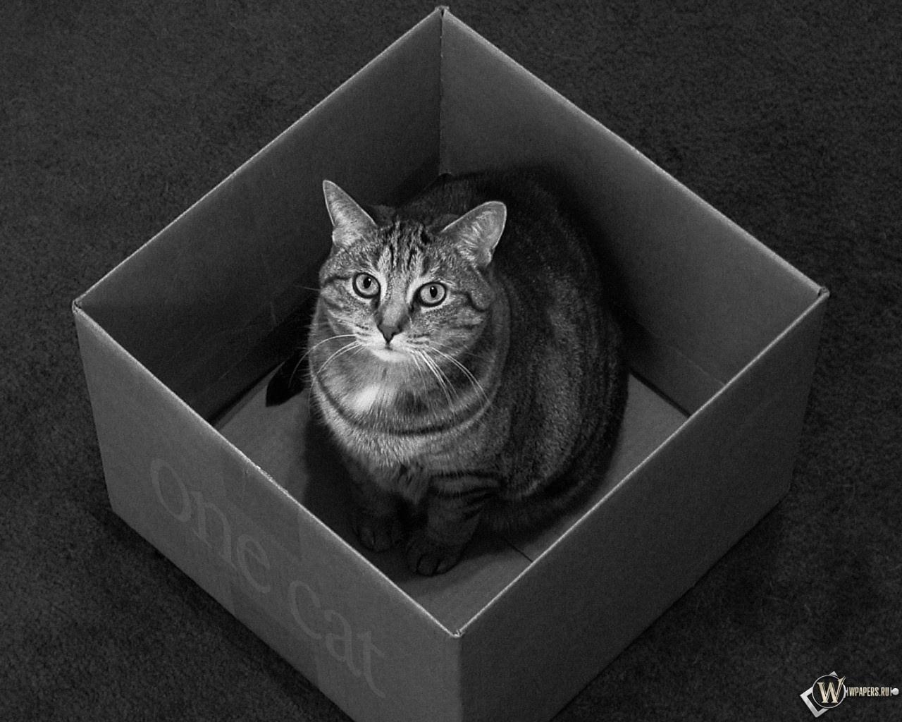 Кот в коробке 1280x1024