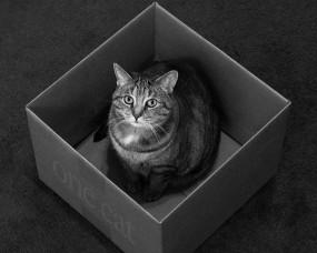 Обои Кот в коробке: Кот, Коробка, Кошки