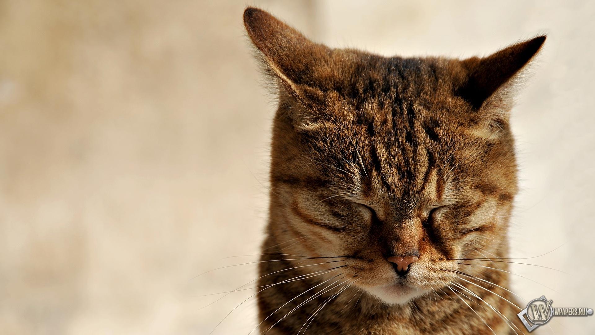 Кошка зажмурилась 1920x1080