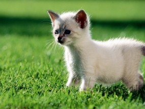 Обои Котёнок на траве: Трава, Зелёный, Котёнок, Кошки