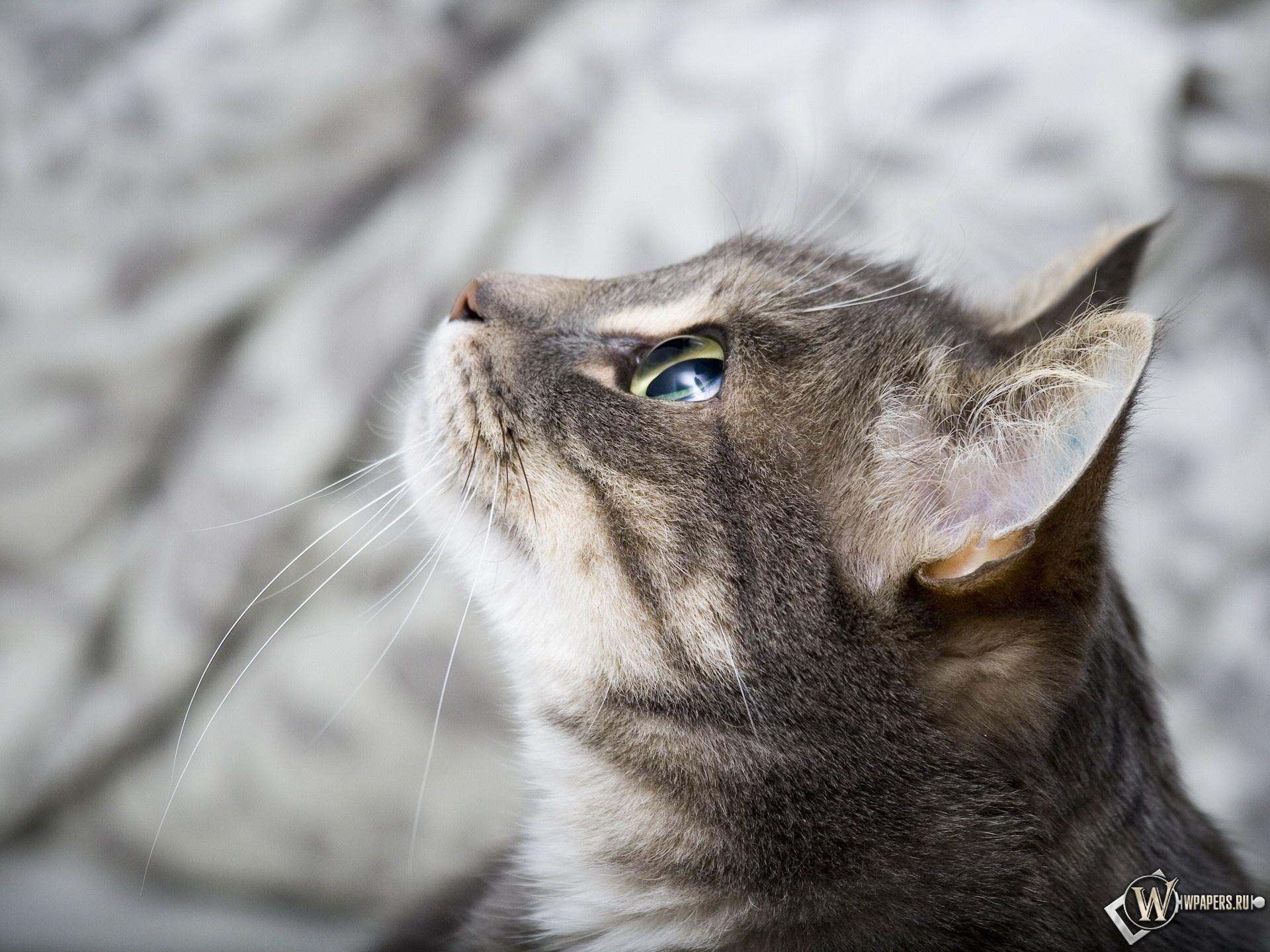 Кот в профиль 1920x1440