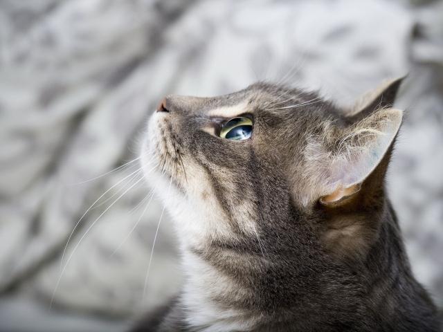 Кот в профиль