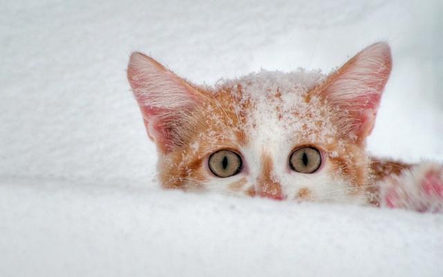 Котёнок в снегу