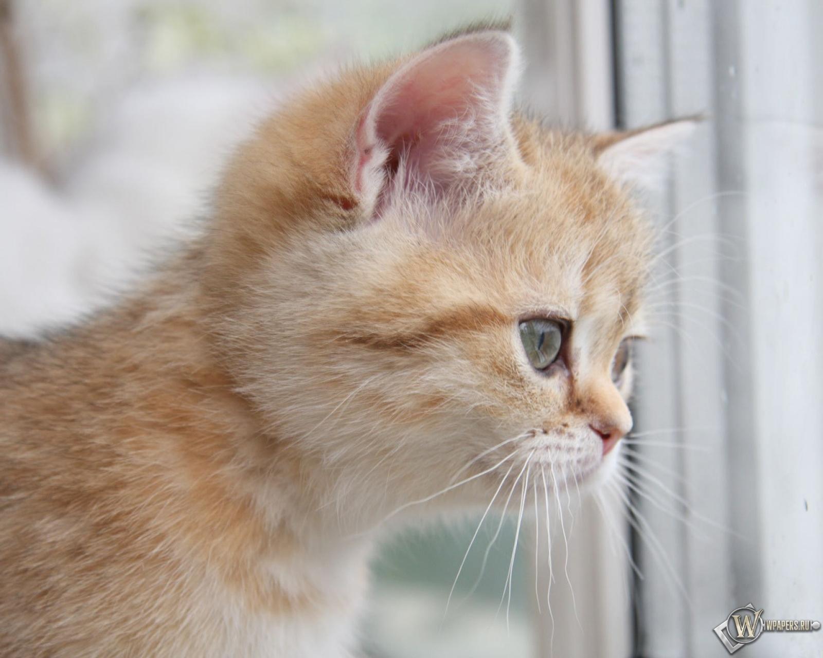 котята на окне kittens on the window  № 3063274 без смс
