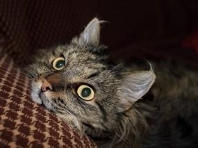Обои Кот: Кот, Животное, Кошки