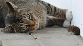 Обои Силы неравны: Кошка, Мышь, Кошки
