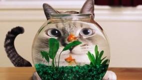 Обои Кот в аквариуме: Аквариум, Рыбка, Кот, Кошки