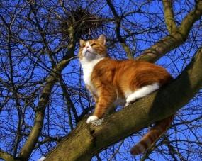 Обои Кот на дереве: Кот, Дерево, Ветки, Кошки