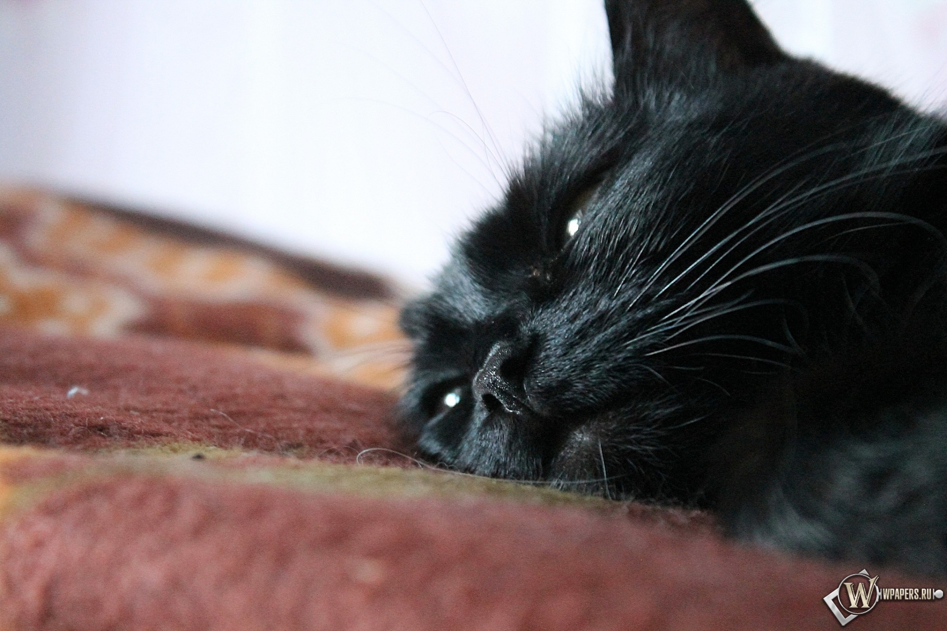 Дремлющая кошка 1920x1280