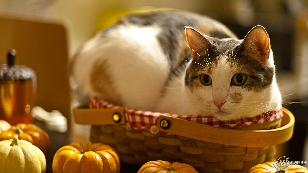 Обои кошка в лукошке кошка стол 1280x720