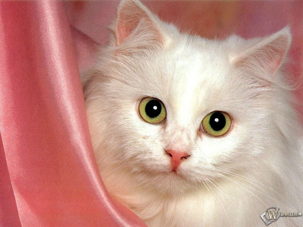 Красивая кошка 1024x768