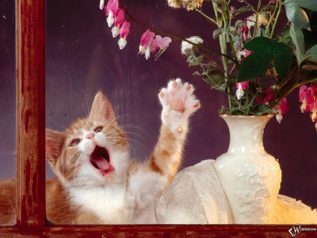 Котенок за стеклом