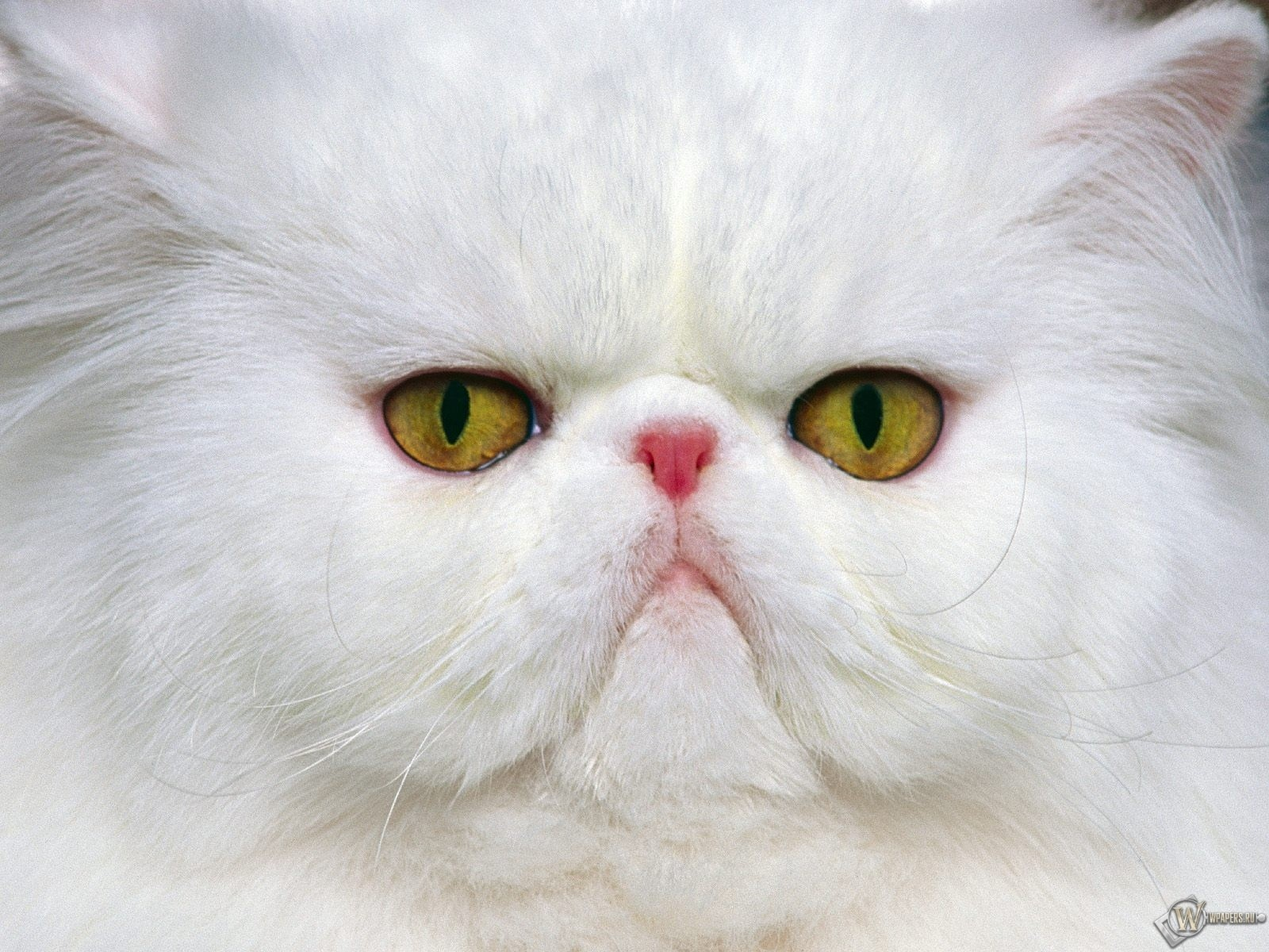 Недовольный кот 1600x1200